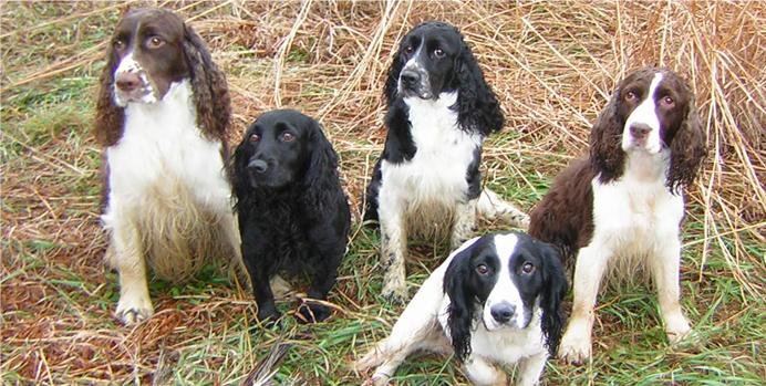 Gun Dog Training & Lifestyle Obedience Training in Pennsylvania