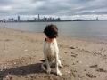 city dog on beach